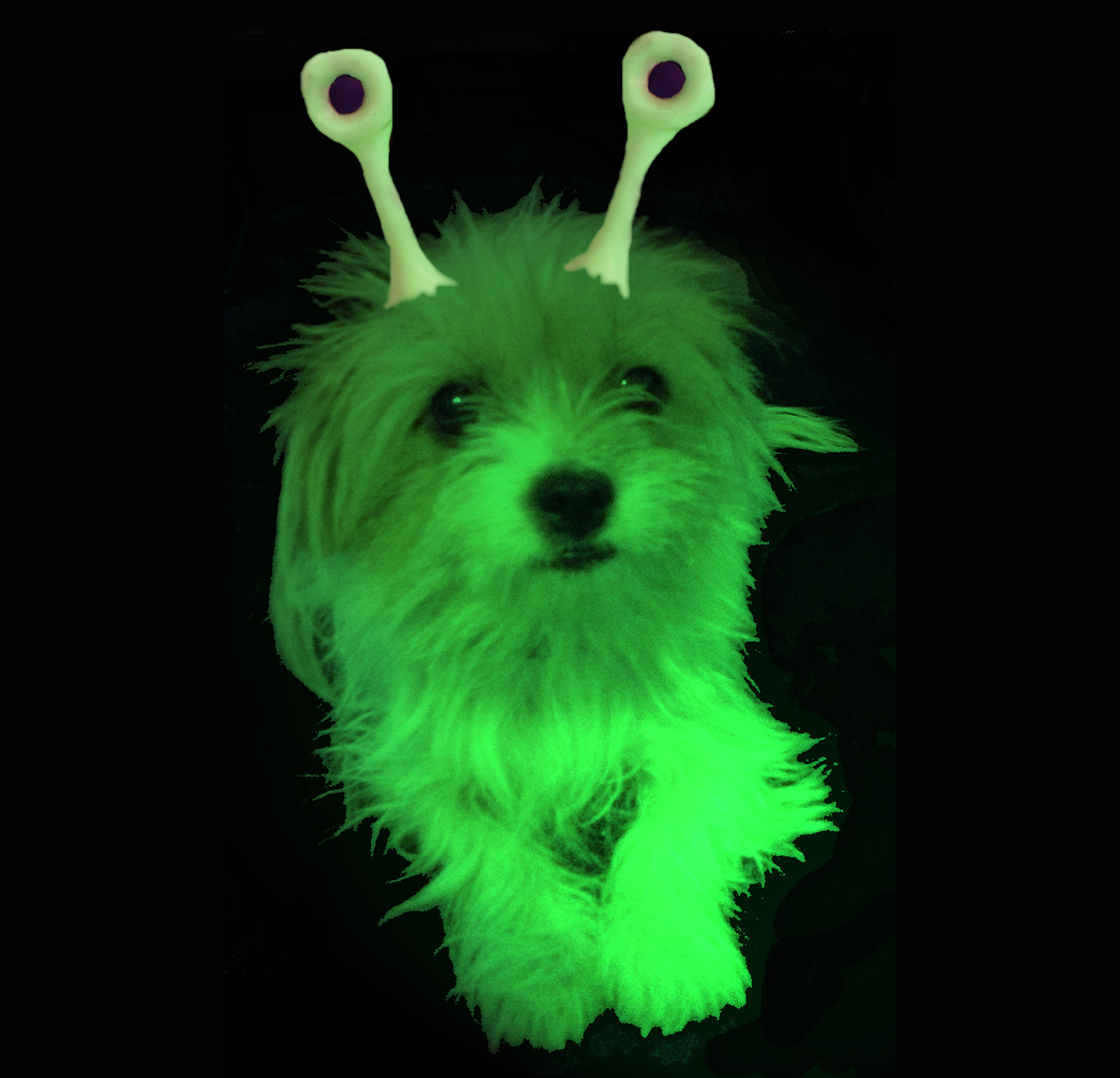 Kikki the alien dog
